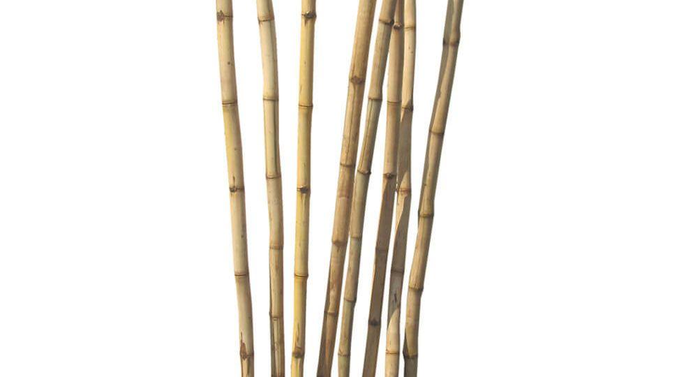 Bamboo Floor Deco